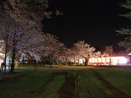 桜撮ったど~!